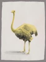 Avestruz limón Aguada de pigmento sobre papel indio hecho a mano 75x55 cms