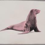 León marino marsala Aguada de pigmento sobre papel indio hecho a mano 75x55 cms